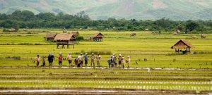 laos-agrobusiness-tuttolaos