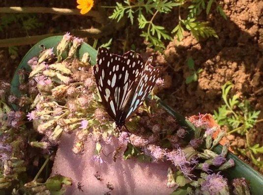 butterfly-park-luang-prabang-2-tuttolaos